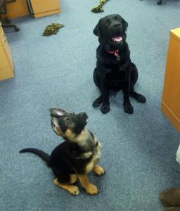 molygran office dogs